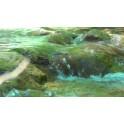 Rio con agua transparente