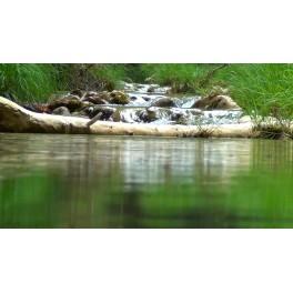 Un rio tranquilo