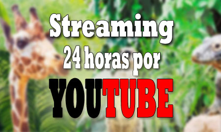 streaming-24-horas-youtube